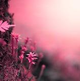tła natury przestrzeni wiosna tekst twój Obrazy Royalty Free
