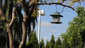 Ta ner fågelförlagematare arkivfilmer