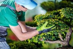 Ta omsorg av trädgårds- träd royaltyfria foton