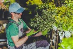 Ta omsorg av trädgårds- växter royaltyfri bild