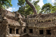 TA Phrom σε Angkor Wat, Καμπότζη Στοκ Εικόνα