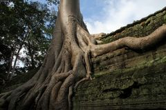 Ta Phrom Royalty Free Stock Photography