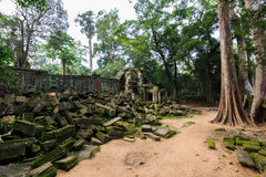 TA Phrom, Angkor Wat, Καμπότζη Στοκ Φωτογραφίες