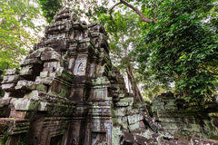 TA Phrom, Angkor Wat, Καμπότζη Στοκ Εικόνες