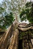 TA Phrom, Angkor Wat, Καμπότζη Στοκ Φωτογραφία