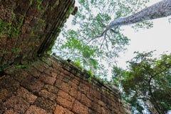 TA Phrom, Angkor Wat, Καμπότζη Στοκ Εικόνα