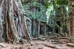 Ta Phrom at Angkor Wat, Cambodia Royalty Free Stock Photos