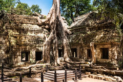 Ta Phrom at Angkor Wat, Cambodia. Historical architecture of Khmer Stock Images