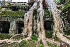 Ta Phrom, Angkor Wat, Camboja Imagens de Stock