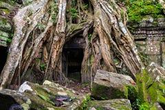 Ta Phrom, Angkor Wat, Camboja Foto de Stock