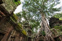 Ta Phrom, Angkor Wat, Camboja Imagem de Stock Royalty Free