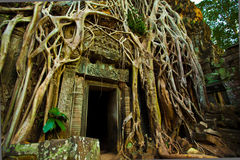 Ta Phrom Doorway Stock Images