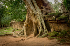 Ta Phrom Ruins Stock Photos