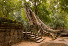 Ta Phrom Ruins Royalty Free Stock Photography