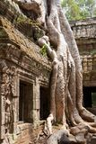 Ta Phrom temple Royalty Free Stock Photo
