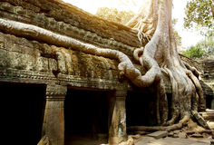 Ta Phrom temple Royalty Free Stock Image