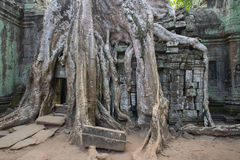 Ta Phrom Temple, Cambodia Stock Images