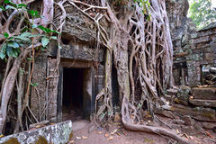 Ta Phrom temple ruins and rubble roots Royalty Free Stock Image