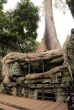 Ta Prohm寺庙在吴哥柬埔寨 免版税图库摄影