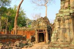Ta Prohm寺庙在吴哥窟,在寺庙废墟的树, Cambodi 库存照片