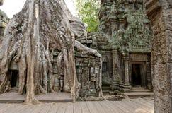 Ta Prohm寺庙在柬埔寨的密林 免版税库存图片