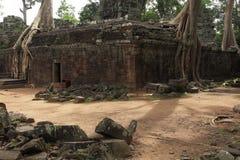Ta Prohm寺庙在吴哥窟 库存图片