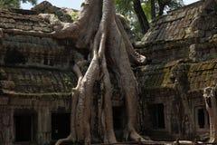 Ta Prohm寺庙在吴哥窟 免版税库存照片