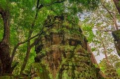 Ta Prohm寺庙在吴哥,暹粒,柬埔寨 免版税库存图片