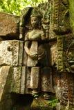 Ta Prohm寺庙大树盖子位于暹粒市的寺庙柬埔寨 图库摄影