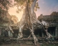 Ta Prohm寺庙巨型树在吴哥柬埔寨 免版税库存照片