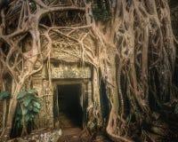 Ta Prohm寺庙巨型树在吴哥柬埔寨 库存照片