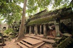 Ta Prohm寺庙废墟,吴哥,柬埔寨 库存照片