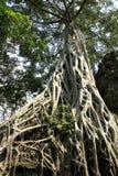 Ta Prohm寺庙,柬埔寨 库存图片