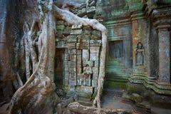 Ta Prohm寺庙, Angkor,柬埔寨 库存图片