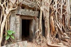 Ta prohm废墟,吴哥窟,柬埔寨 免版税库存图片