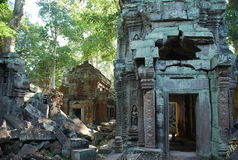Templo de Ta Prohm, Angkor, Cambodia Fotos de Stock Royalty Free