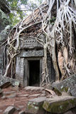 ta prohm świątyni Obraz Stock