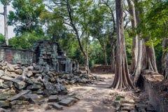 Ta Prohm świątynia Obraz Royalty Free