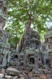 Ta Prohm świątynia Zdjęcie Stock
