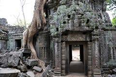 Ta Prohm świątynia Obrazy Stock