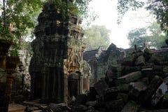 Ta Prohm świątynia Kambodża - Antyczny Angkor - Siem Przeprowadza żniwa - Zdjęcia Royalty Free