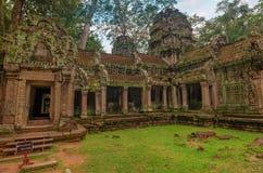 Ta Prohm świątynia w Angkor, Siem Przeprowadza żniwa, Kambodża Obrazy Royalty Free