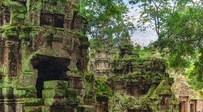 Ta Prohm świątynia w Angkor, Siem Przeprowadza żniwa, Kambodża Obraz Stock