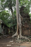 Ta Prohm świątynia w Angkor Wat Zdjęcia Stock