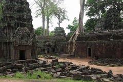 Ta Prohm świątynia w Angkor Wat Obraz Royalty Free