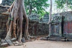 Ta Prohm świątynia w Kambodża Fotografia Stock