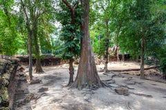 Ta Prohm świątynia w Kambodża Zdjęcia Royalty Free