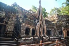 Ta prohm świątynia zakrywająca w drzewie zakorzenia Angkor Wat Kambodża Fotografia Stock
