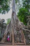 TA Prohm, μέρος του Khmer ναού σύνθετο, Ασία η Καμπότζη συγκεντρώνει siem Αρχαία Khmer αρχιτεκτονική στη ζούγκλα Στοκ Φωτογραφία