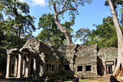 TA Prohm σε Angkor Wat Στοκ Φωτογραφίες